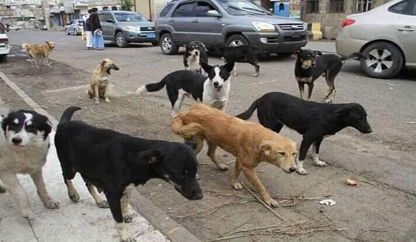Photo of الضالع| الكلاب الضّالة تقتل وتصيب 6 مواطنين بينهم طفلة